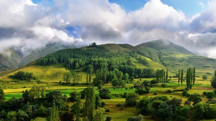 Зелена країна: як Туреччина вкриває себе лісами